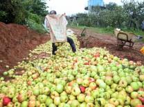 태안군, 농작물 재해보험 가입 지원 '자연재해 미리 대비하세요!'